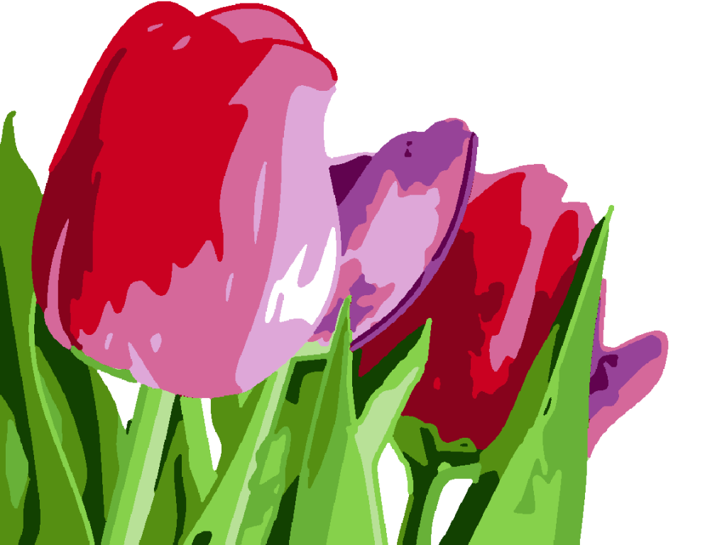 about-tulips